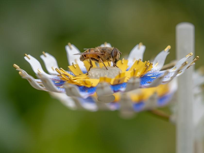 Matilde Boelhouwer Flower Food for Buzz insect germany dutch bee bumblebee moth