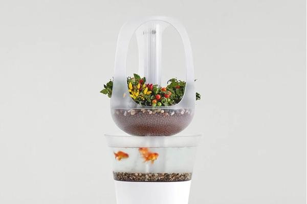 KENALKAN EVA POT TANAMAN DAN AQUARIUM YANG BISA MENJADI LAMPU DEKORASI DSGNTALK AQUARIUM PLANT FISHTANK LAMP PRODUCT DESIGN